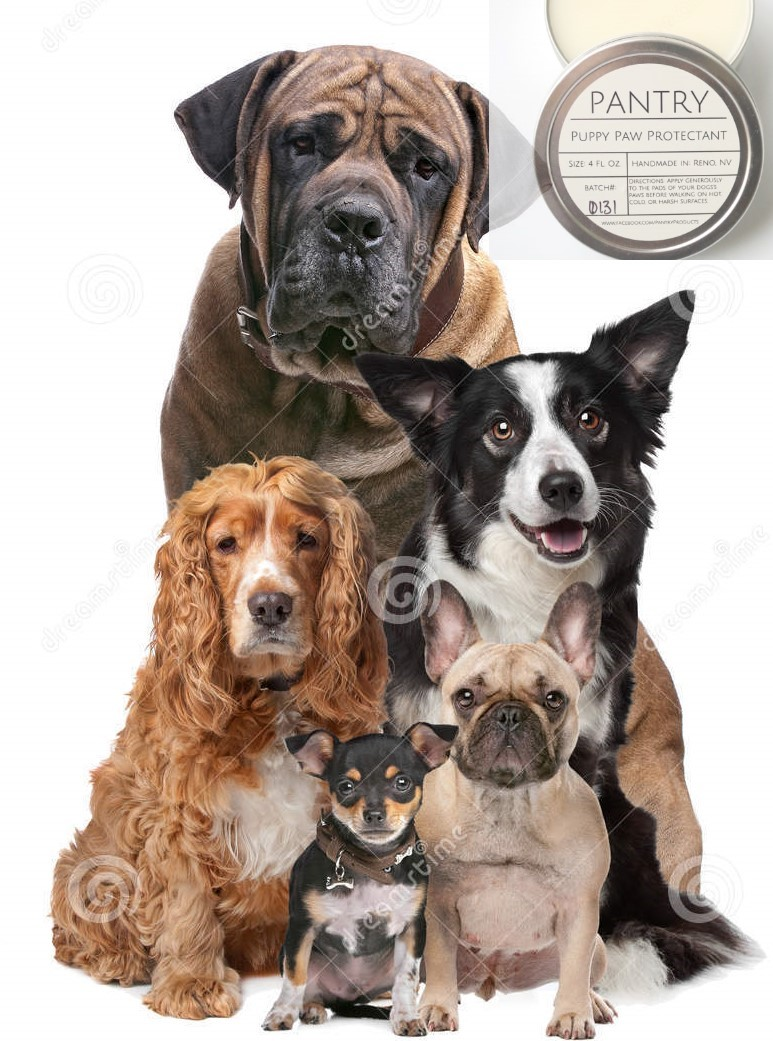 five-dogs (2)